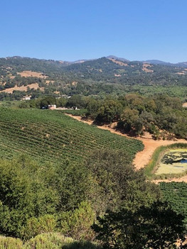 Wine By Appointment Visits the Left Bank…..in Alexander Valley, California