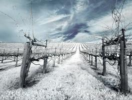 Wine Life Cycle