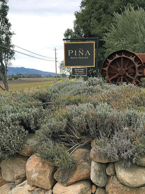Pining for Piña - Wine By Appointment  Visits Piña Napa Valley