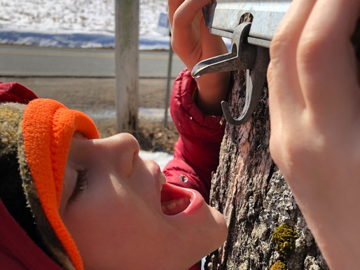 How to Celebrate the Magic of Maple Syrup this March Break