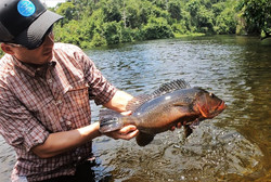 rio-azul-jungle-lodge-rico_tucunaré