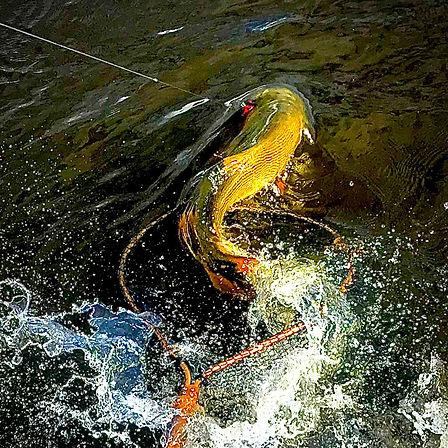 soul-fly-fishing-cursos-viagens.jpg