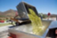 RVS containerbak.jpg