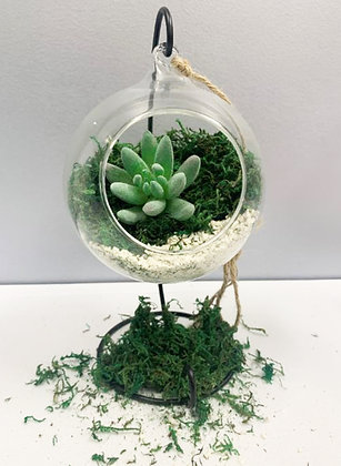Succulent with hanging stand kits [Minimum Order 48]