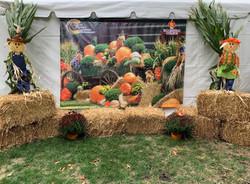 Harvest Backdrop
