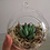 Thumbnail: Hanging Succulent With Stand Kits [Minimum Order 50]