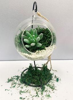 Succulents - Hanging