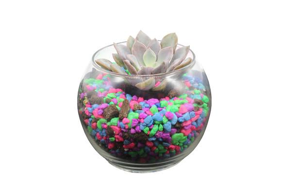 cactus-terrariumjpg