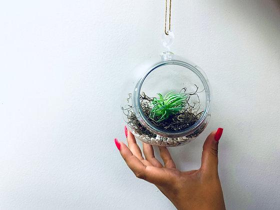 Hanging Succulents [Minimum Order 50]