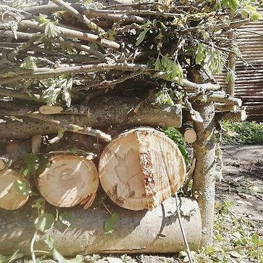 Jeg har i weekenden fældet et træ. Og de