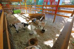 3_Petting_Zoo.JPG