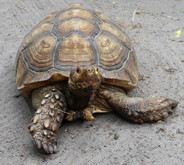 10_Tortoise.JPG