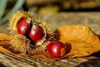 chestnut-1784282_1280[1].jpg