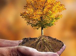 Erde nature-4589912__340.jpg