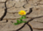 Blume_in_Wüste_flower-887443__340.jpg