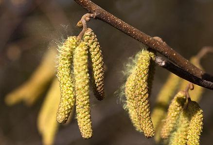 pollen-4845841_1280[1].jpg