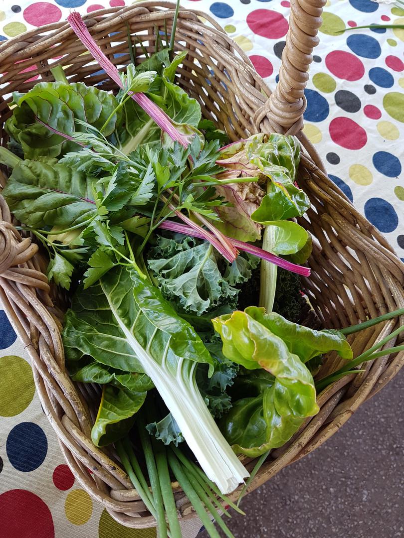 Freshly picked garden produce