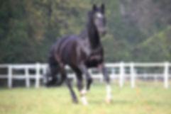 geheiltes aktives Pferd nach Inhalation