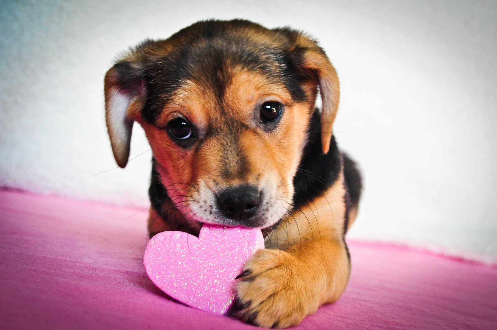 Camden's Valentine's Day Puppy Grams