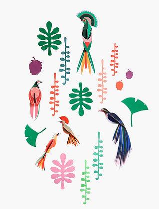 Studio ROOF Wall of Curiosities | Bird Observer