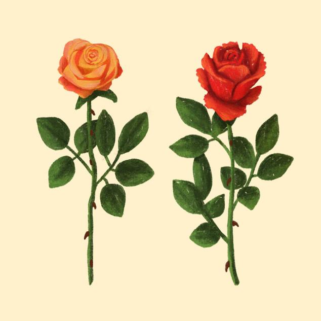 Rose_Study copy.jpg