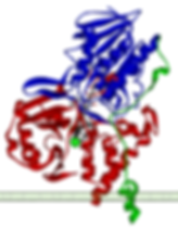 Monoamine_oxidase_A_2BXS.png