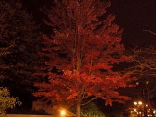 My Autumn Fascination