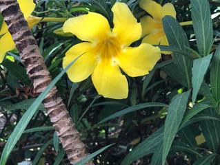 My Hawaiian Botanical Fascination