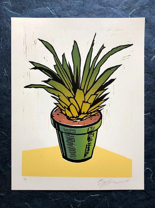 """Pineapple"" (present)"