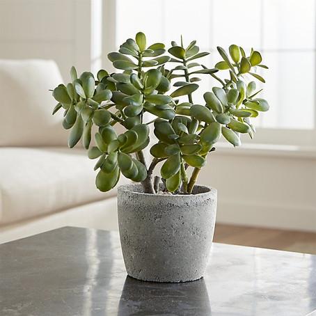 Le FENG SHUI et les plantes