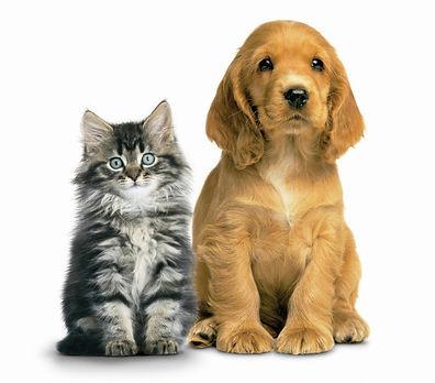 Nomes-Pets-2.jpg