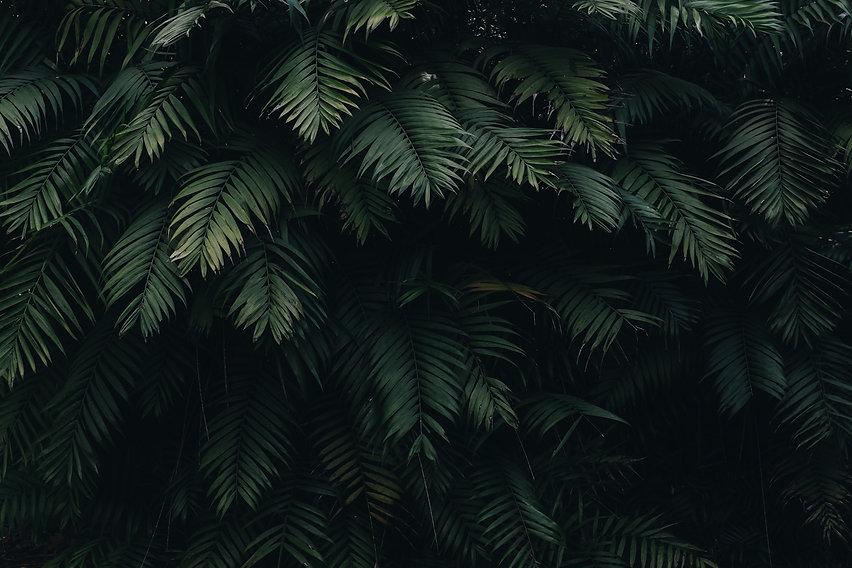pexels-cátia-matos-1072179.jpg