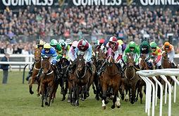 Cheltenham Horses Racing.jpg