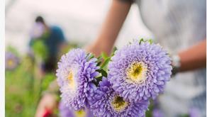 Floret Flower Farms