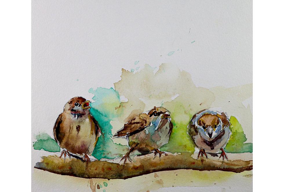 3 Vögelchen