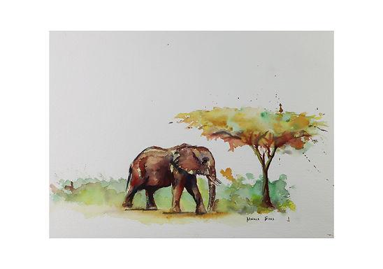 Der kleine Acacia