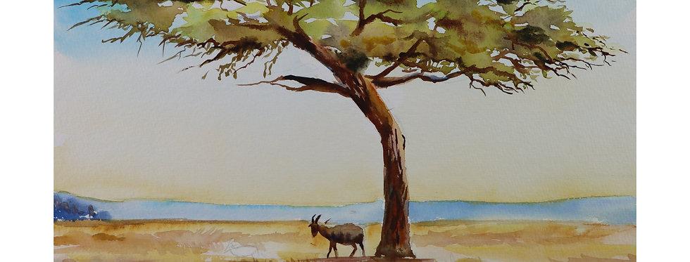 Gazelle in Savanne