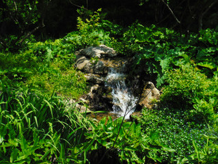 Mill Creek Eco-Pond Fountain