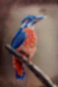 Childrens art classes, Carlsbad Art school, Soft pastel, Bird Drawing