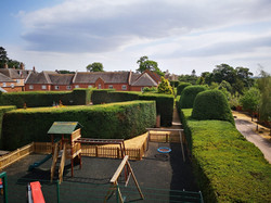 Finished Yew hedge