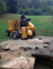 stump removal woth Carlton 4012 at cadburys, local tree surgeon
