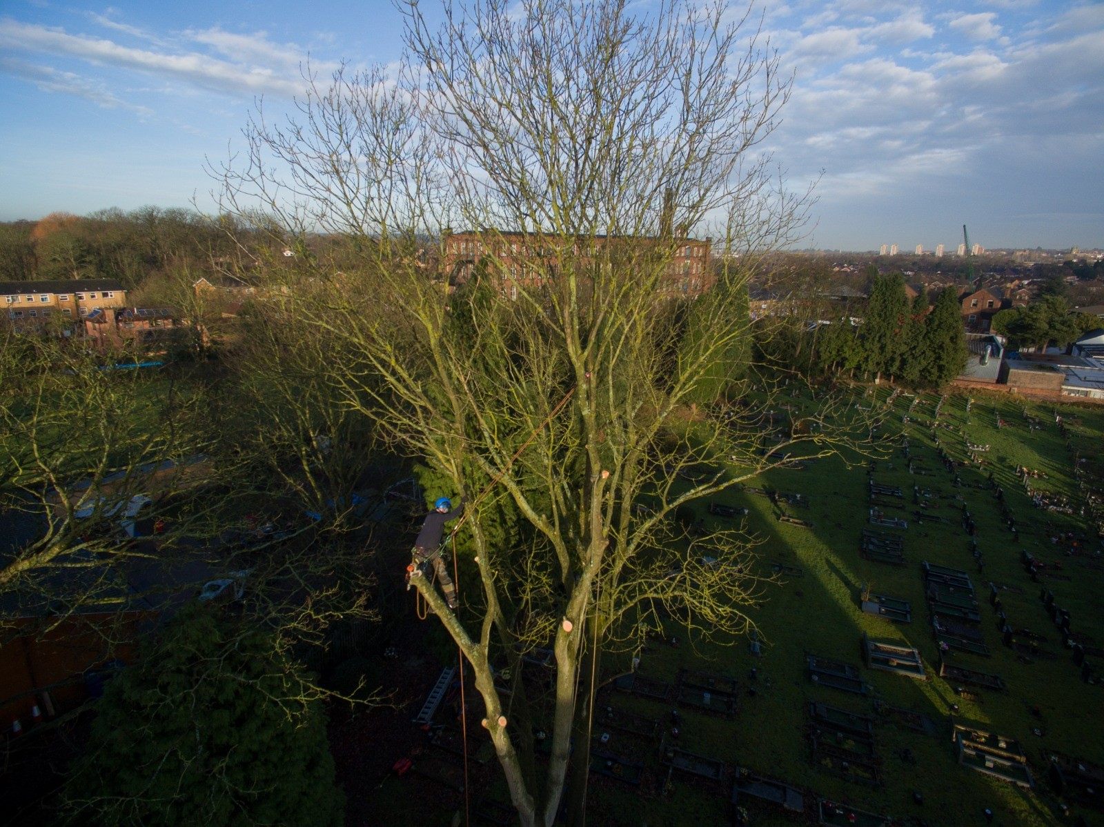 Ash tree dismantle with rigging