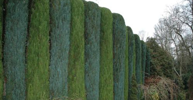 Hedge triming, Tree surgeon near me