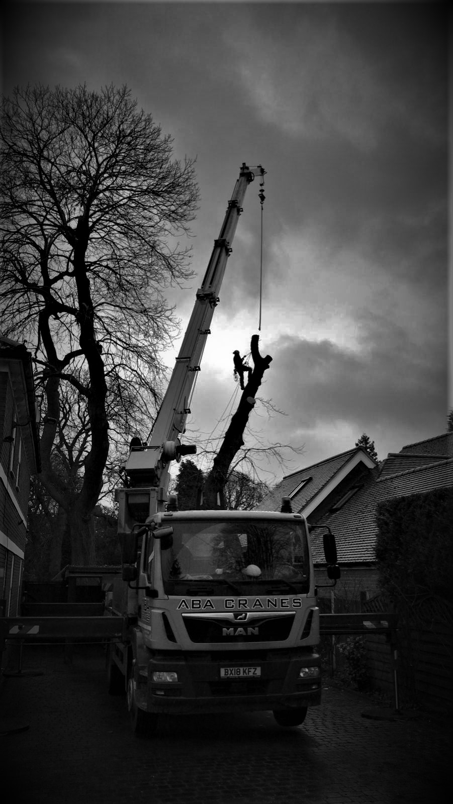 Removal of Sweet chestnut over house using a crane