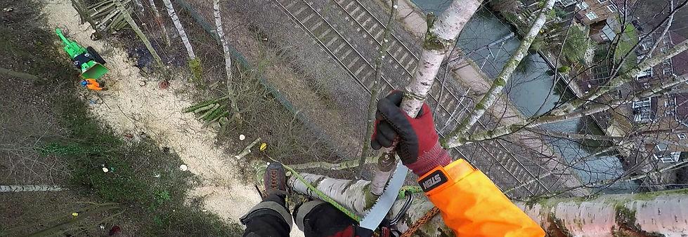 Tree Removal, Sutton coldfield tree surgeon near me
