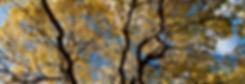 Ash die back tree surgeon near me