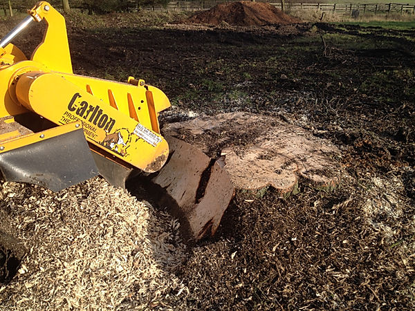 large stump removal with carlton 7015 tracted machine, local tree surgeon
