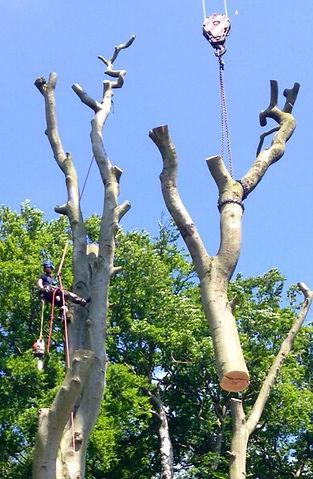 Tree removal using a crane