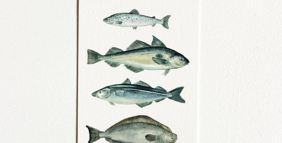 Gavelapp: Flere fisker