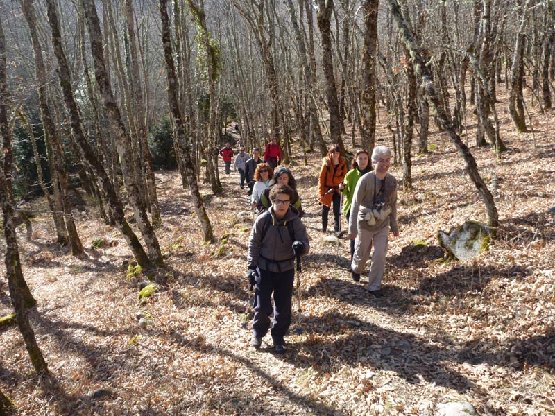 Bosque del Tejedelo - Sanabria - 21-02-2012